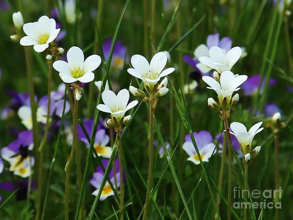 Photograph - Tiny Flowers by Lutz Baar