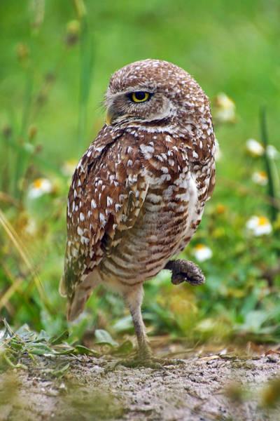 Photograph - Tiny Owl by Leda Robertson