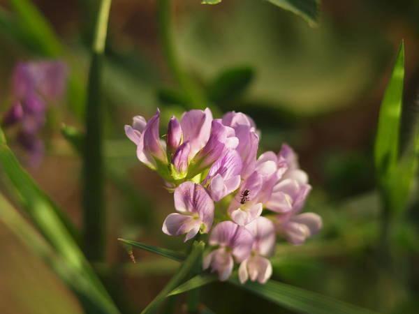 Photograph - Tiny Petals  by HW Kateley