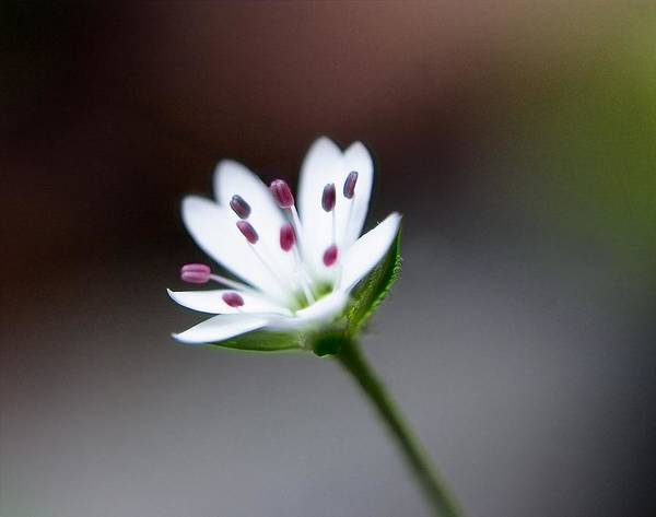 Photograph - Tiny Rainforest Blossom by David Rich