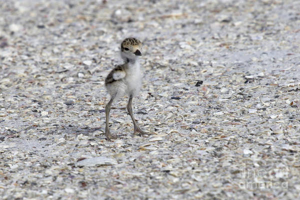 Photograph - Tiny Survivor by Meg Rousher