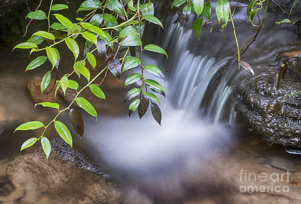 Photograph - Tiny Waterfall by Louise St Romain