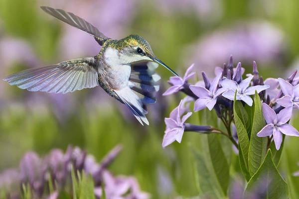Photograph - Tiny Wonders by Leda Robertson