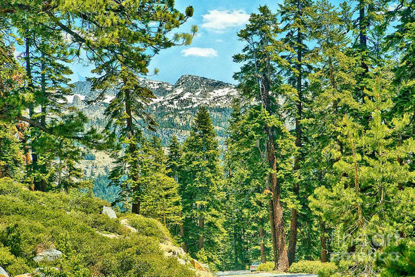 Photograph - Tioga Road Yosemite National Park by Bob and Nadine Johnston