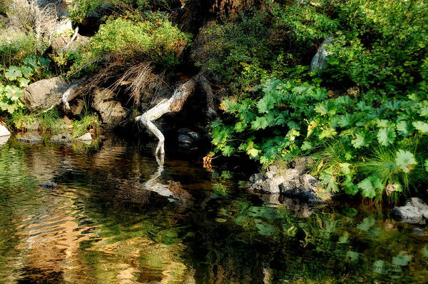 Wall Art - Photograph - Tip Toeing At The River's Edge by Donna Blackhall