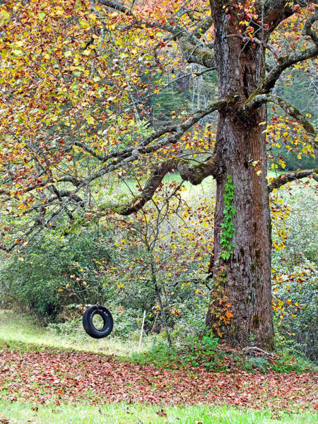 Photograph - Tire Swing And Poplar Tree by Duane McCullough