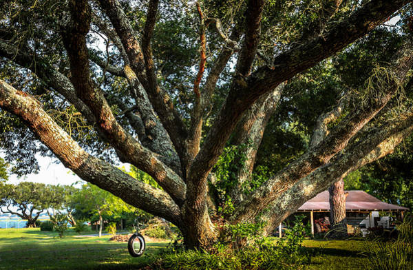 Living Things Photograph - Tire Swing by Karen Wiles