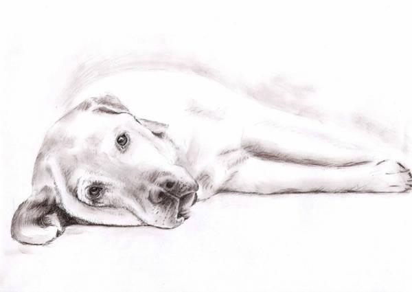 Hund Drawing - Tired Labrador by Nicole Zeug