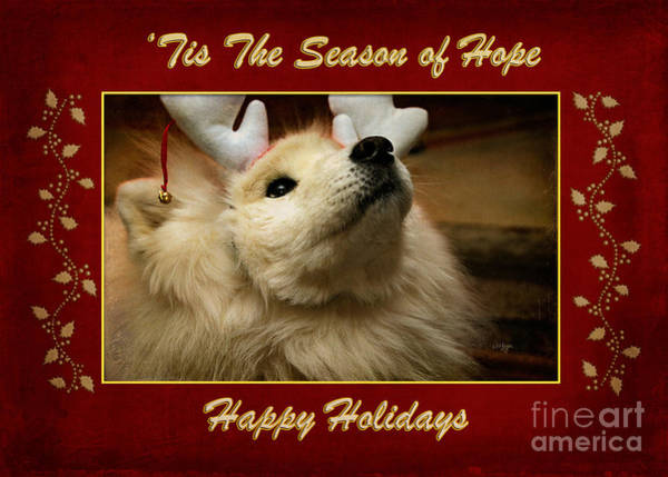 Wall Art - Photograph - 'tis The Season Of Hope Happy Holidays by Lois Bryan