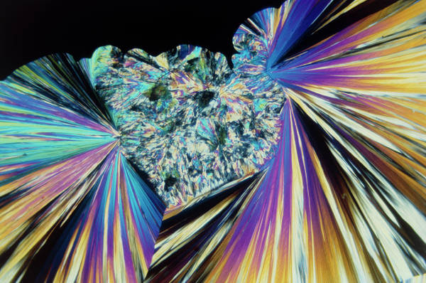 Wall Art - Photograph - Tnt Explosive Crystals by Stephen A. Skirius/science Photo Library