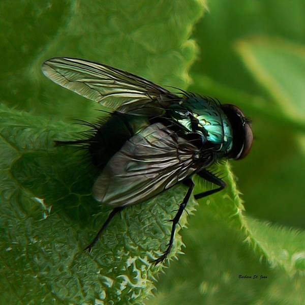 Photograph - To Be The Fly On The Salad Greens by Barbara St Jean