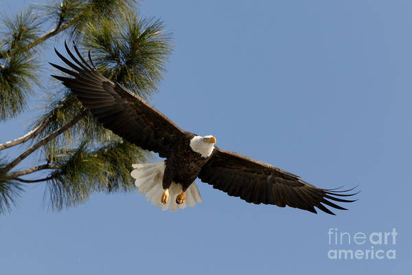 Photograph - To Soar by Beve Brown-Clark Photography