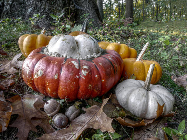Photograph - To Swell The Gourd by Richard Reeve