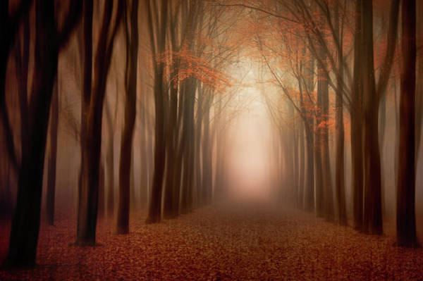 Blur Wall Art - Photograph - To The Light .......... by Piet Haaksma