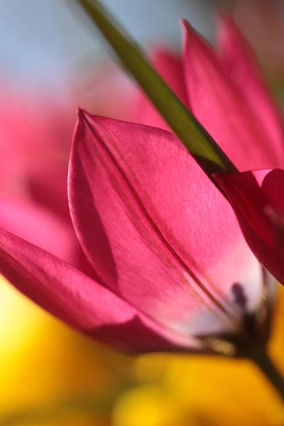 Perky Photograph - To The Light by Connie Handscomb