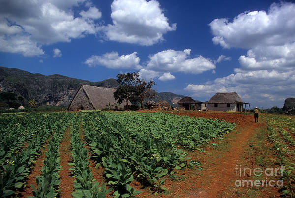 Photograph - Tobacco Farm by James Brunker