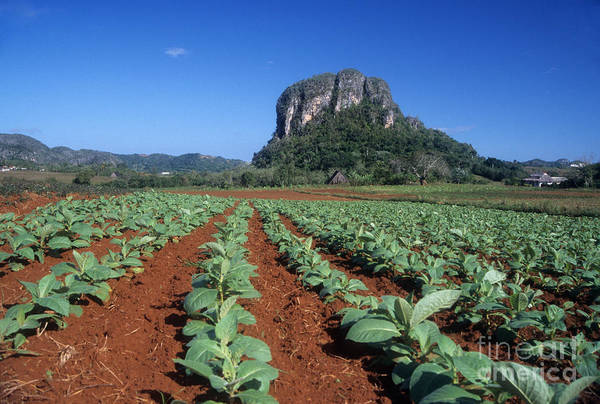 Photograph - Tobacco Fields Near Vinales Cuba by James Brunker
