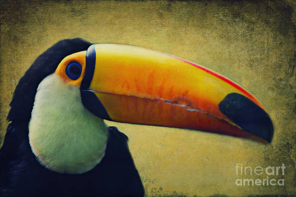 Digital Art - Toco Toucan by Angela Doelling AD DESIGN Photo and PhotoArt