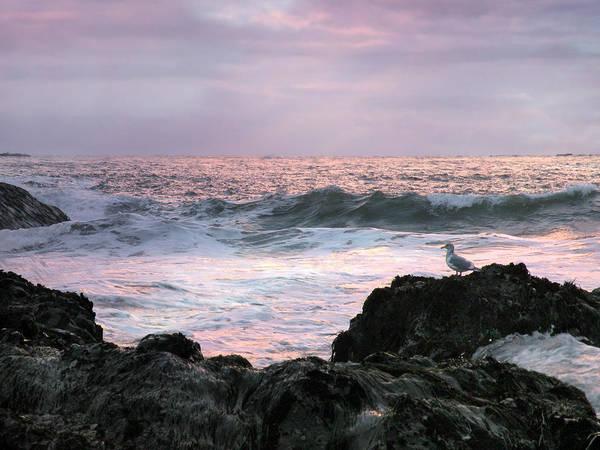 Photograph - Tofino Sunset by Micki Findlay