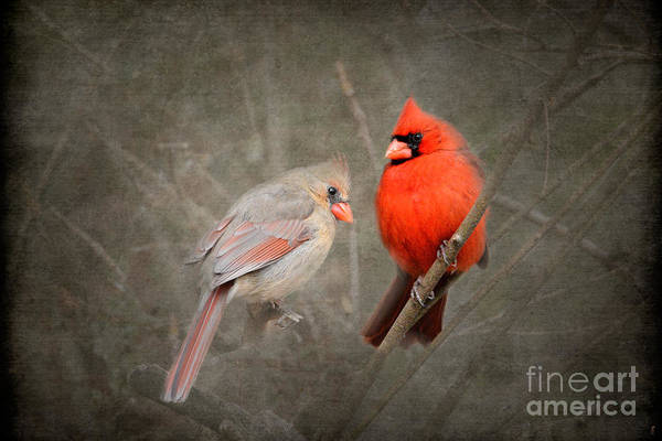 Female Cardinal Photograph - Together Again by Jai Johnson