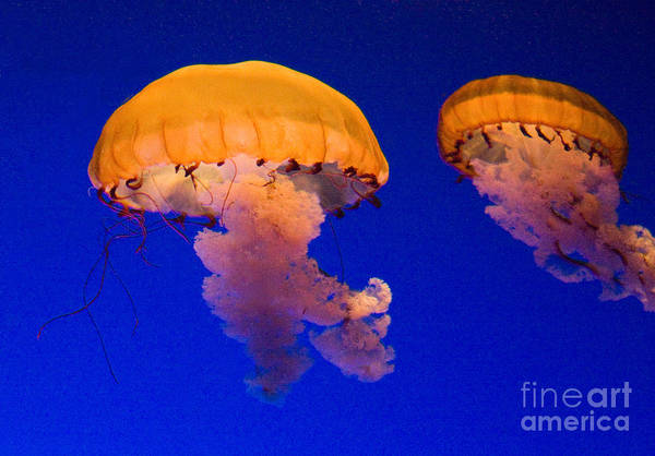 Wall Art - Photograph - Together by Bob McGill
