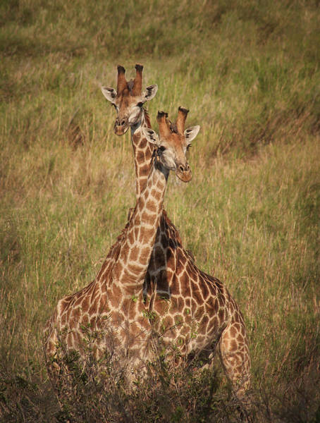 Photograph - Togetherness by Kim Andelkovic