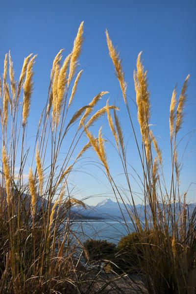 Photograph - Toitoi And Mountain by Jenny Setchell