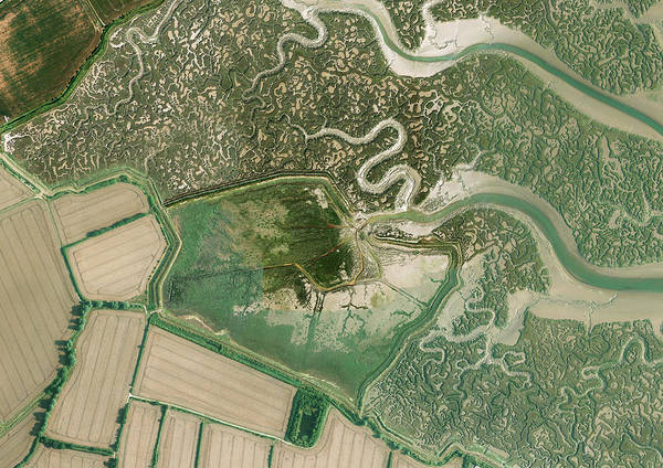 Coastal Marshes Photograph - Tollesbury Managed Realignment Site by Getmapping Plc/science Photo Library