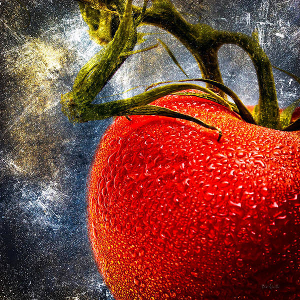 Photograph - Tomato On A Vine by Bob Orsillo