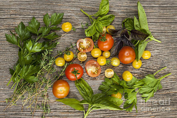 Green Vegetable Photograph - Tomatoes And Herbs by Elena Elisseeva