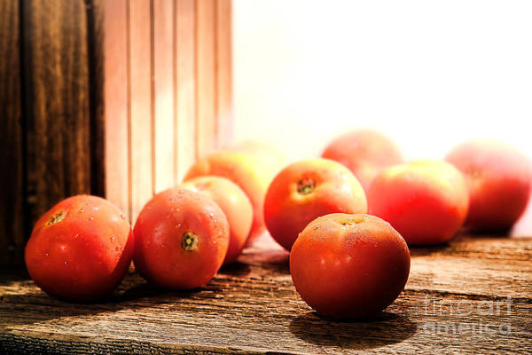Diffuse Photograph - Tomatoes In An Old Barn by Olivier Le Queinec