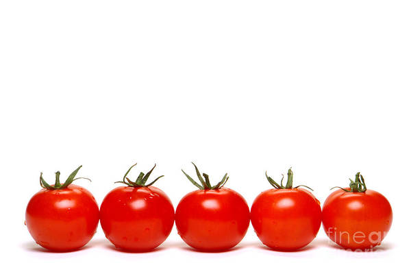 Photograph - Tomatoes by Olivier Le Queinec