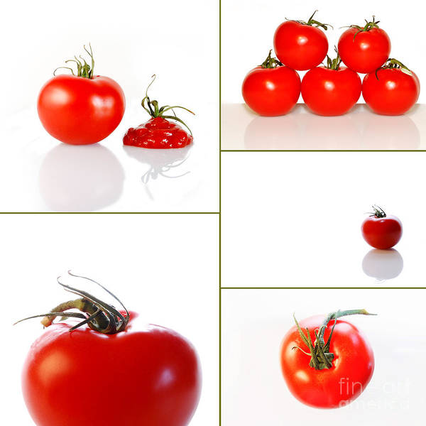 Sabine Photograph - Tomatoes On White by Sabine Jacobs