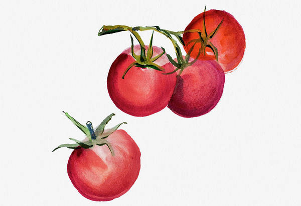 Ingredients Digital Art - Tomatoes Watercolor Painting by Mashuk