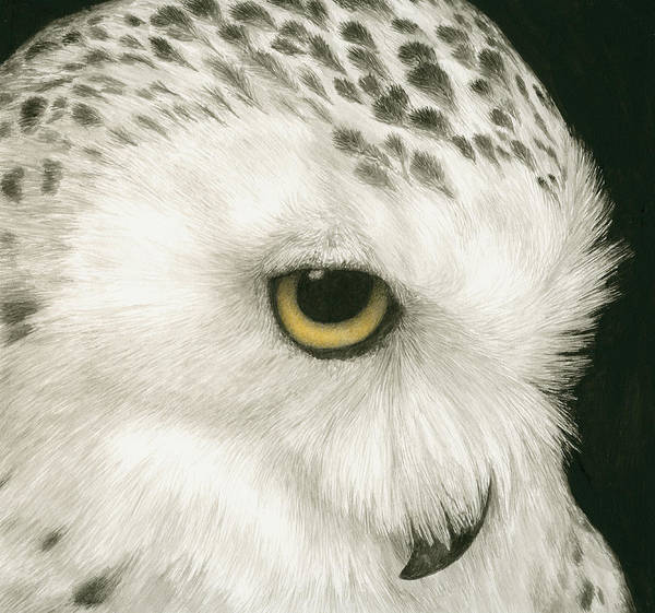 Snowy Owl Wall Art - Painting - Topaz In The Snow by Pat Erickson