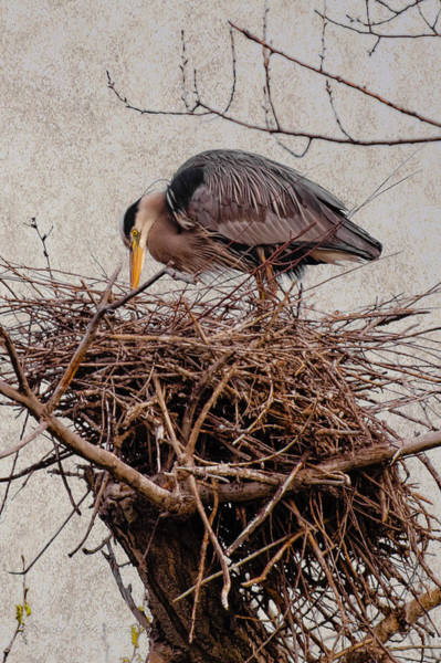Photograph - Topping The Nest by Jim Thompson