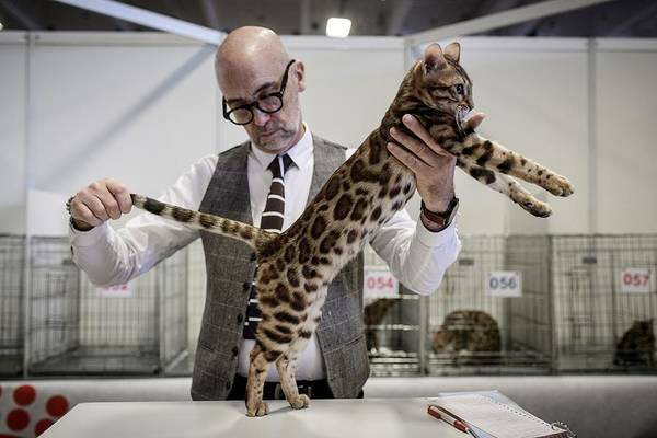 Offbeat Photograph - Topshot-france-animal-show by Philippe Lopez