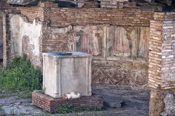 Photograph - Torre Argentina Roman Cat Sanctuary by Melany Sarafis
