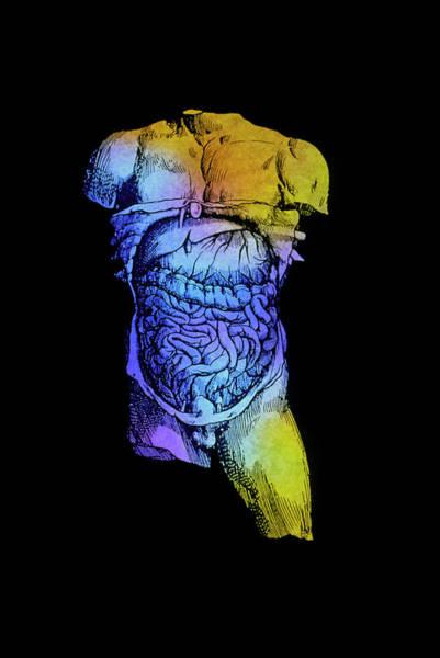 De Humani Corporis Fabrica Photograph - Torso Of Plate 55 by Mehau Kulyk/science Photo Library