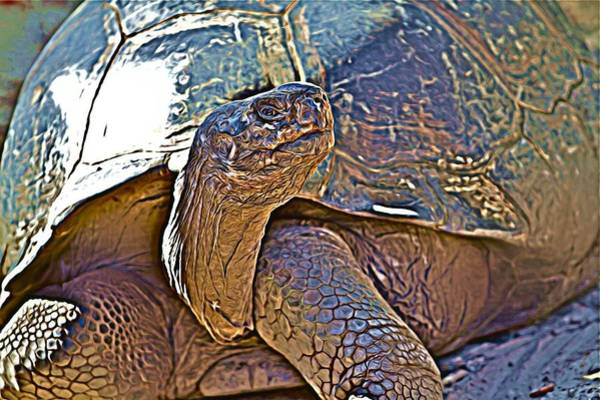 Photograph - Tortoise One by Alice Gipson