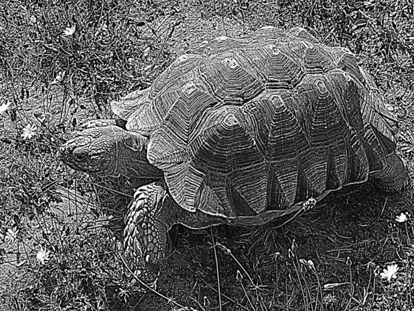 Photograph - Tortoise Patterns by Suzy Piatt