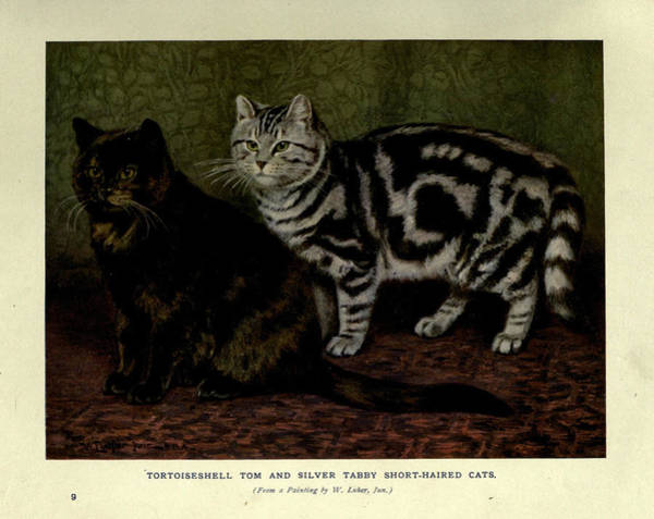 Manx Cat Wall Art - Painting - Tortoiseshell Tom And Silver Tabby Cats by Philip Ralley