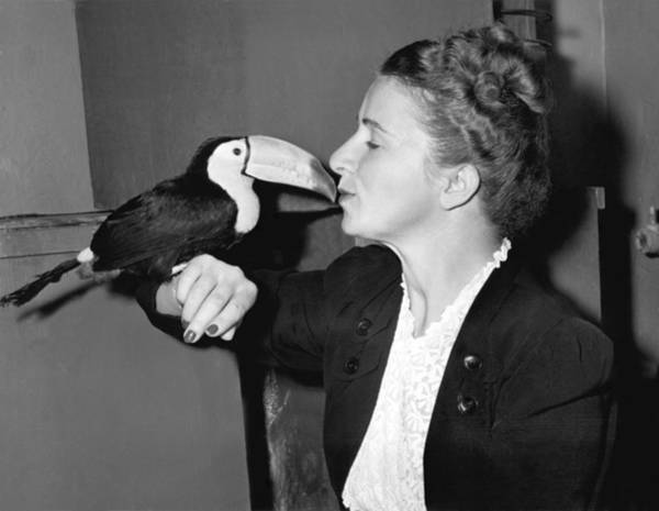 Toucan Photograph - Toucan Kiss by Underwood Archives