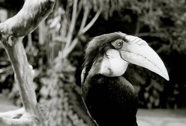 Photograph - Toucan by Shaun Higson