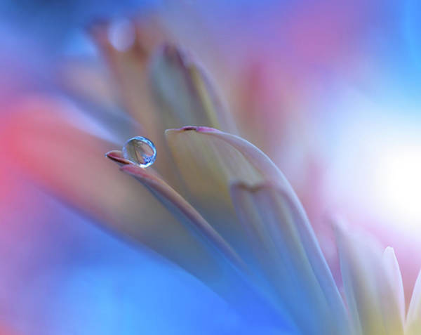Drops Wall Art - Photograph - Touch Me Softly... by Juliana Nan