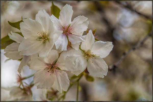 Photograph - Touch Of Pink by Erika Fawcett