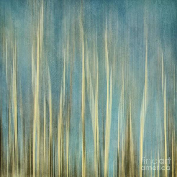 Bark Photograph - Touching The Sky by Priska Wettstein