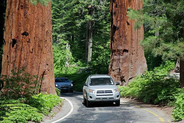 Touring Photograph - Tourism In Sequoia National Park by Jim West