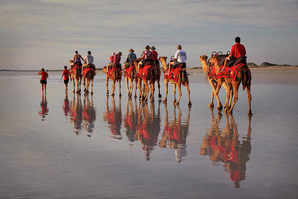 Broome Photograph - Tourist Camel Train On Cable Beach by David Wall Photo