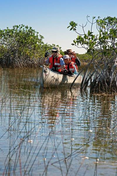 Everglades National Park Photograph - Tourists Canoeing In Mangrove Swamp by Jim West